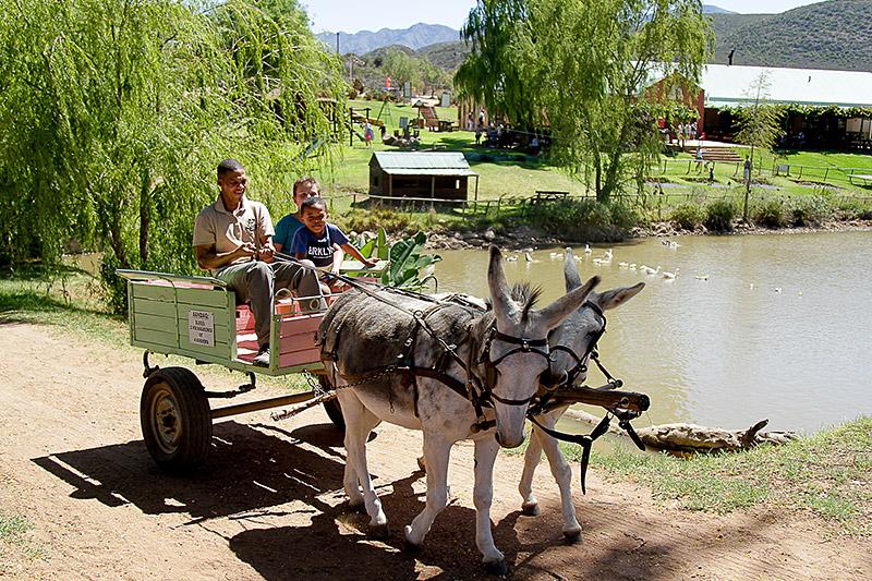 Donkey Cart Rides at Wilgewandel Oudtshoorn