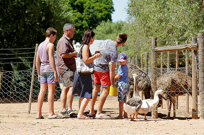 Animal Feeding at Wilgewandel Oudtshoorn